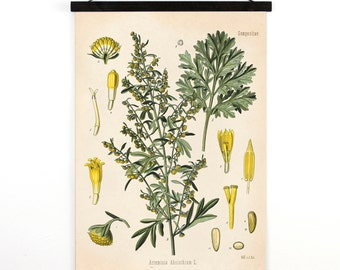 Wormwood Pull Down Chart - Vintage Botanical Absinthe Artemisia Absinthium Reproduction Print - Kohler's Medicinal Plant Guide -CP291cv