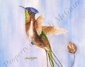"Watercolor Print ""Majestic Spatulina"" by Sandi McGuire"