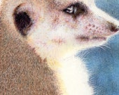 "Original ACEO - Meerkat - 2.5"" x 3.5"" Unique Artwork - Free Shipping - Portion of Proceeds to Charity"