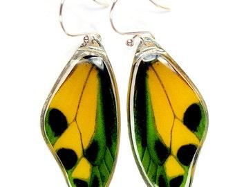 Rare Butterfly Image - Tithonus Birdwing