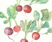 Original Watercolor Radishes Painting, 8x10, red, maroon, purple, green, vegetable art, kitchen decor