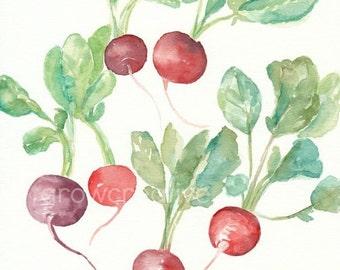 Original Watercolor Radishes Painting, 8x10, red, maroon, purple, green, vegetable art, kitchen decor, still life