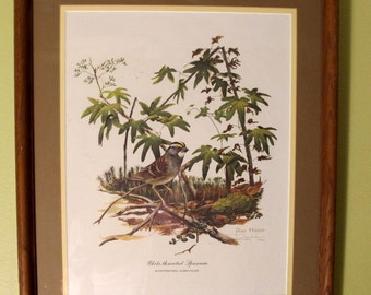 """Vintage 70's wall art framed print by nature artist, Ray Harm white-throated sparrow  15"""" x 19"""""""