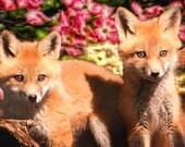Baby Fox Photo - Wildlife Photography - Nature Photo - Animal Photo - Nursery Decor - Child's Room Decor - Wall Art - Home Decor