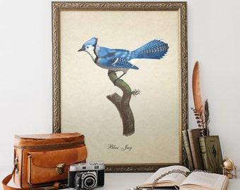Antique Botanical Bird Print Blue Jay Print Vintage Natural History Bird Art Decorative Blue Jay Print Reproduction B014
