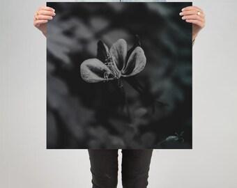 "Floral 7 ( 24"" X 24"" Print )"
