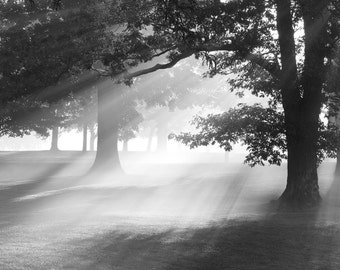 Trees in fog photo art - 8x10 black and white nature photography - Misty Oaks - sunrays print home decor wall 11x14 12x18 16x20 20x30 canvas