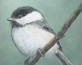 Black-Capped Chickadee original watercolor bird art