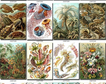 Amazing ANIMAL COLLAGES collection of 105 vintage images pictures in High resolution digital download printable illustrations nature 300 dpi