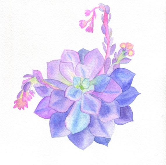 Original Watercolor Blooming Echeveria Succulent