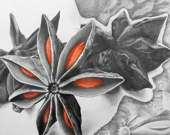 20x20, My Star Anise, framed in white wood, photographic print by Katherine Baronet
