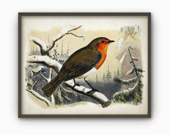 Robin Redbreast In Winter Wall Art Print - Vintage Robin Illustration - Robin Redbreast Print - Red Robin Bird Decor AB469