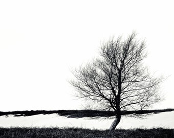 LONE TREE & SNOW - Winter Tree Photograph Square Print Black and White, Sheffield, Yorkshire, Available mounted and framed for wall.