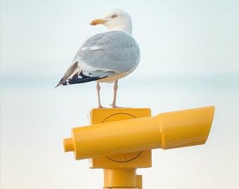 "Seagull Art - Seagull Photography - Coastal Decor - Seaside Decor - Wall Art - Fine art Photography - Nature Photography - ""Gull on Watch"""