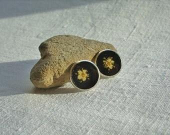 Real flower earrings - Spring elderflowers - Silver tone earring studs - Pressed flower ear posts - Nature inspired jewelry - Botanical