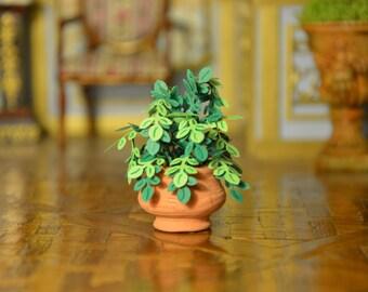 miniature chelle 1 12 plante verte maison de par. Black Bedroom Furniture Sets. Home Design Ideas