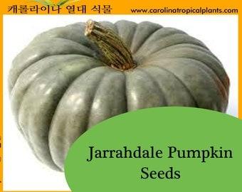 Jarrahdale Pumpkin Seeds - 25