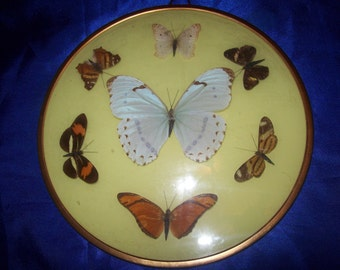 Butterfly Display Collection
