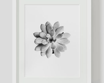 Succulent Art, Black and White Photography, Plant Photography, Succulent Poster, Succulent Wall Art, Succulent Printable, Art Printable