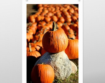 pumpkins, connors farm, danvers, massachusetts, new england, fall, autumn, photography, fine art print