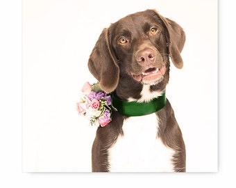Cute dog print, whimsical dog photo, dog photography, dog print, dog picture, dog art, animal art print, pretty dog print, dog and flowers