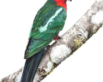 """5x7"""" King Parrot - Australian Bird Art Print"""
