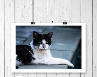 OTTO THE CAT - Auf Leinwand, Acrylglas oder Poster bis 180x120cm. Fine Art Katzen Poster. Katzen Fotos und Katzen Fotos Leinwand
