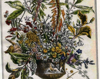 January Floral Arrangement Print- Botanical Illustration Book Plate- 12 MONTHS of FLOWERS Furber Casteels - wedding anniversary newborn gift