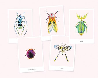 Pack of 5 cards insects