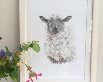 Eloise the Sheep.  Fine Art Giclee Print