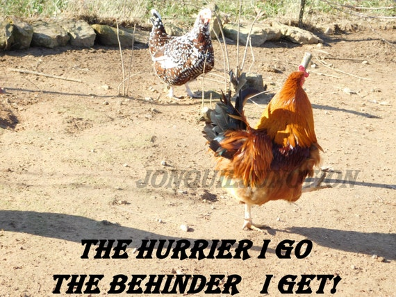 Chicken Printable Quotes: Items Similar To Chicken Picture, Quote, Digital Download
