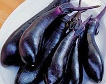 Eggplant Seeds 50 Millionaire Purple Seeds 60 Days