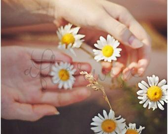 Flower Print. Daisy Photography. Flower Photography. Daisy Print. Daisy Photograph. Flower Wall Art. Floral. Botanical. Nature Print.