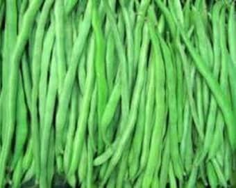 Kentucky Wonder Pole Bean Seed , 1/2  lb., Heirloom, Open Pollinated, USA Grown