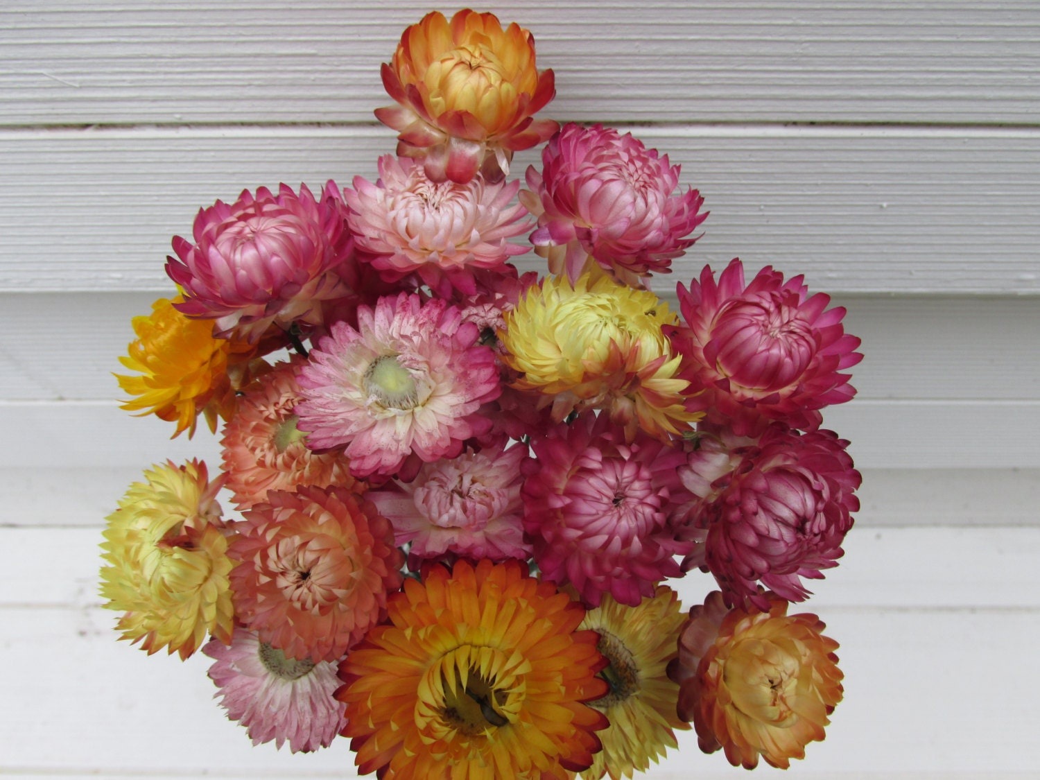 Dried Strawflowers 20 Long Wired Stems for Bouquets Crafts