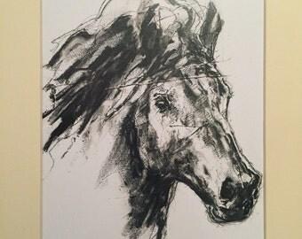 Free Postage Horses Head Fine Art Print