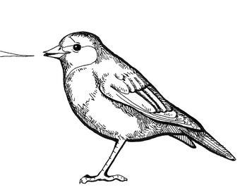 Bird Speech Bubble Card