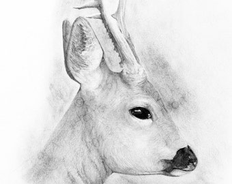 Instant digital download of the original drawing entitled 'Roe Deer' by Thomas Harrison.