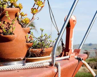 """8""""x10"""" Photograph of a Cactus on the Bow of a Ship"""