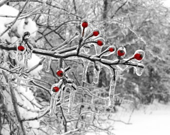Ice Berries, winter nature photography