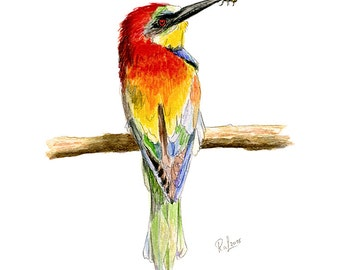 Bee-eater (Bee-eater)