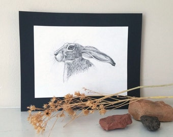 Jackrabbit - 6x8 original drawing, rabbit picture, rabbit drawing, animal portrait, pencil art, original sketch, nature art