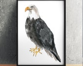 Bald eagle poster Nursery watercolor Cute bird art print ACW165