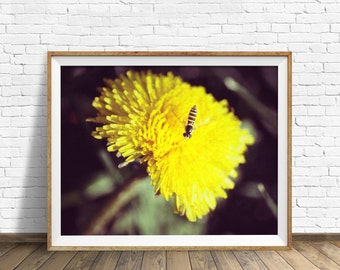 "photography, dandelion, instant download art, printable art, photography, instant download, farmhouse chic, nature, art -""Dandelion Days"""
