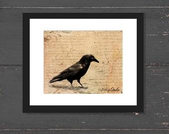 Raven Print LETTER TO A RAVEN Sepia Photo Surreal Black Bird Crow Art Print Raven Crow Vintage Script Sepia Gothic Grunge Halloween Print