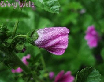 Flower in the Rain Fine Art Photograph Digital Download