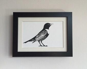 Ring Ouzel bird linocut print - limited edition