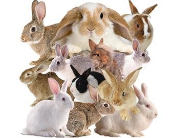 Rabbit bunny hare overlay photo images PNG