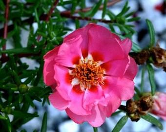 Hot Pink and Orange Flower