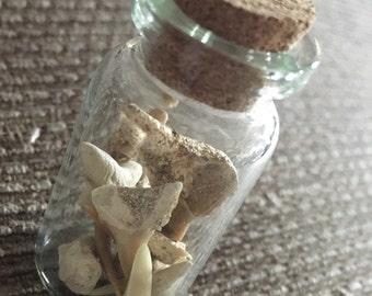 shark teeth vial/potion bottle
